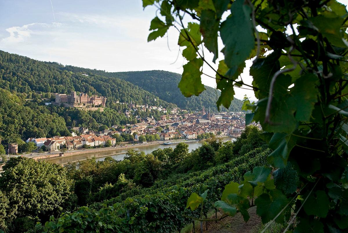 Aerial view of Germany's Wine Growing Region Baden