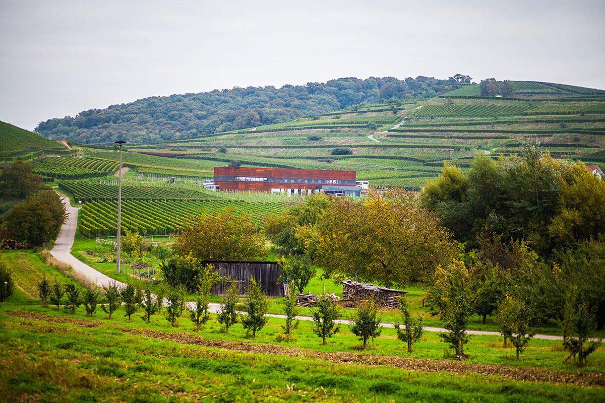 A vineyard in Germany's Wine Growing Region Baden