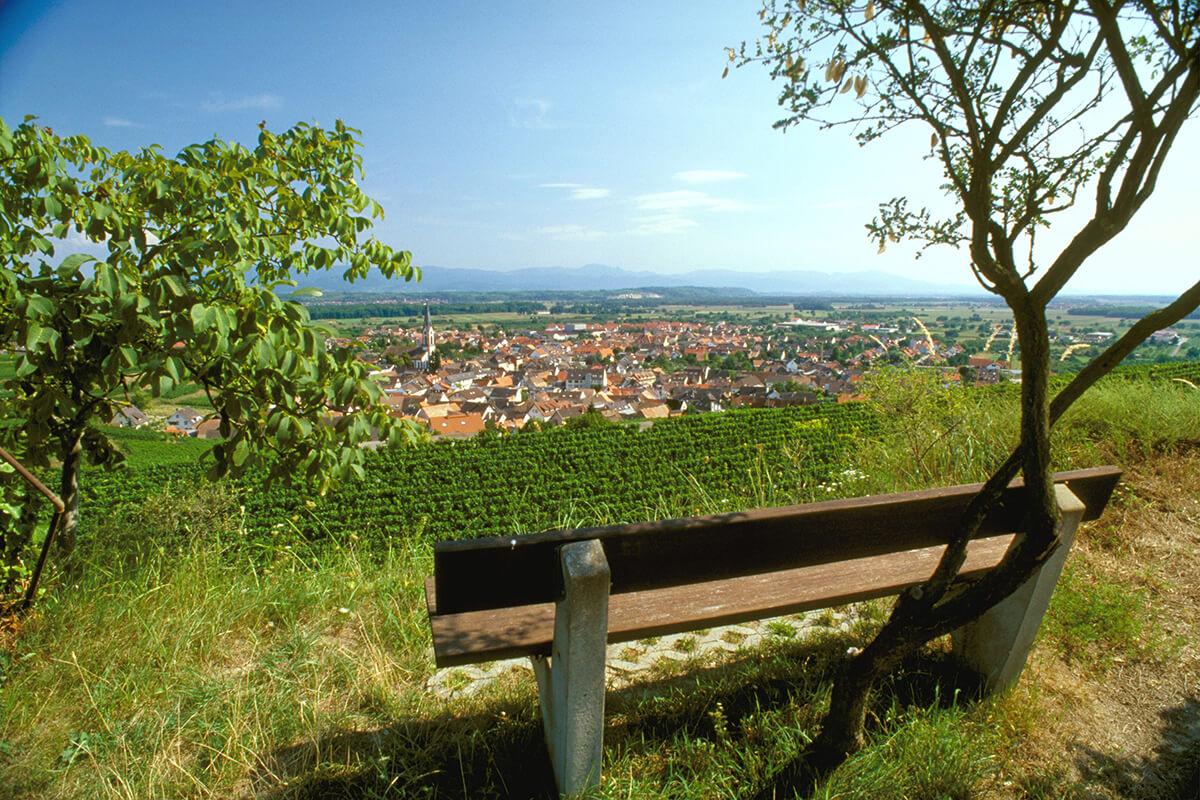 A bench overlooking Germany's Wine Growing Region Baden